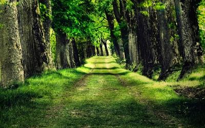 森林の小道.jpg